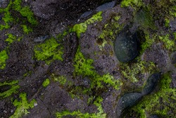 Texture of seaweed and rocks in the coast for wallpaper