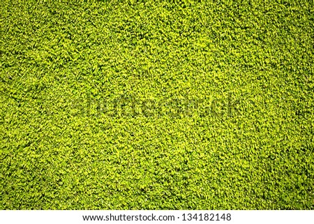 Texture of spring lush green leafs background