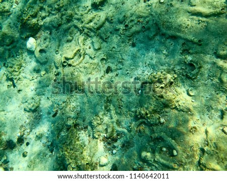 Texture of stones, earth, seabed with coral reefs and algae under blue greenish water, underwater view of the sea, the ocean in a tropical resort. The background. #1140642011
