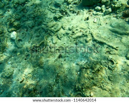 Texture of stones, earth, seabed with coral reefs and algae under blue greenish water, underwater view of the sea, the ocean in a tropical resort. The background. #1140642014