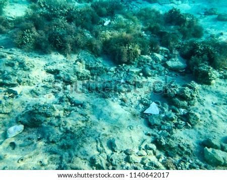 Texture of stones, earth, seabed with coral reefs and algae under blue greenish water, underwater view of the sea, the ocean in a tropical resort. The background. #1140642017