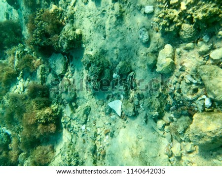 Texture of stones, earth, seabed with coral reefs and algae under blue greenish water, underwater view of the sea, the ocean in a tropical resort. The background. #1140642035