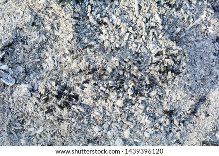 Texture of the ashes. Natural gray background of burnt wood. Burnt coals. #1439396120