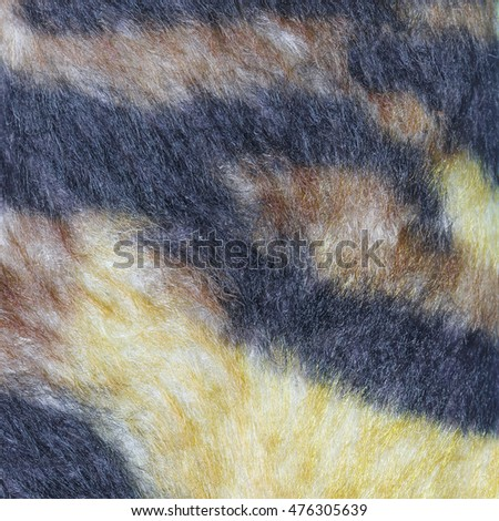 Free Beautiful white tiger fur - colorful texture Photos ...