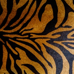 texture of tiger skin