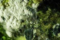 Texture of toxic dark green mold with gray spots. Natural shape background with macro. Shades of green on mold. Mold on food.