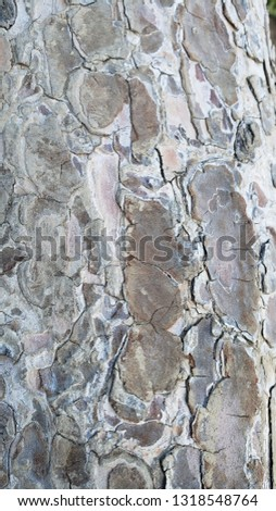 texture of tree bark brown and light brown #1318548764