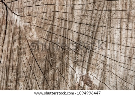 texture of tree trunk. vintage background. wooden background