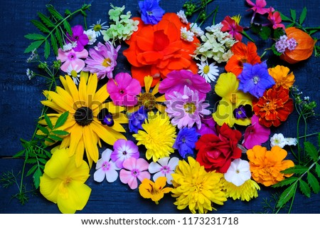Floral background with various garden flowers , top view