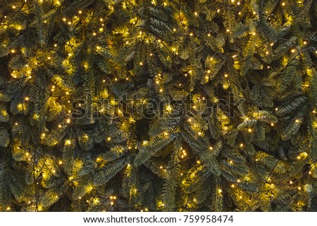 Texture of wall decorated with shining garlands lights and green pine fir branches, Christmas decorations background illuminated in evening #759958474