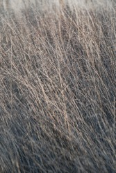 Texture of windswept wild grasses in meadow. A field of dried grass. Natural background pattern for wallpaper.