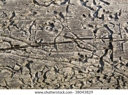 Texture of wood damaged by bark-beetle