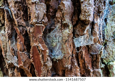 texture picture of tree bark with moth and spider webbing