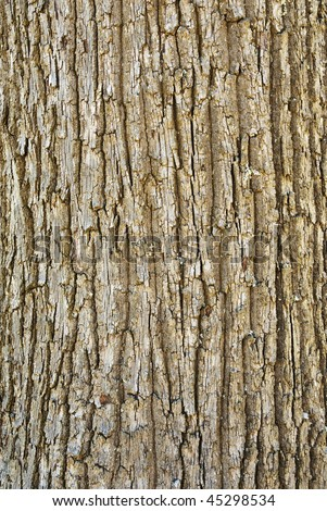 Texture shot of brown tree bark, filling the frame - stock photo