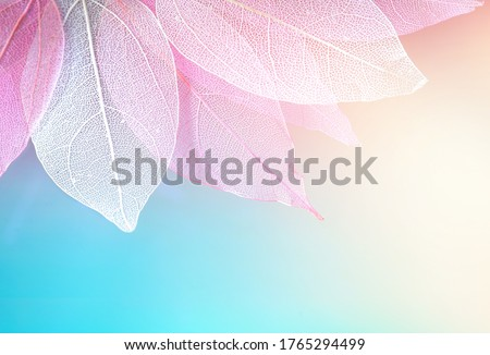 Texture transparent skeleton leaves blue, turquoise, pink peach pastel color, macro. Gentle colorful beautiful artistic image of nature. Natural background.