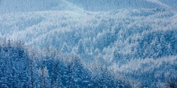 Texture winter mountain vacation panoramic background with pine trees covered by heavy snow with copy space