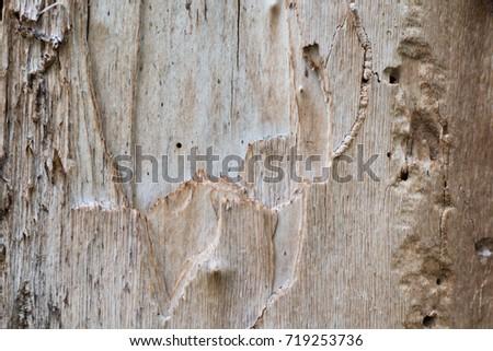 texture wood #719253736