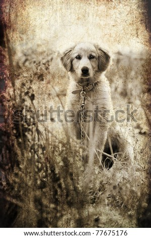 textured and toned sad looking image of a cross breed puppy dog for a vintage or grunge look - stock photo