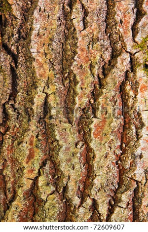 Textured background of old mossy tree bark