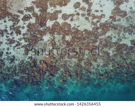 Textured Coral Views from Above #1426356455
