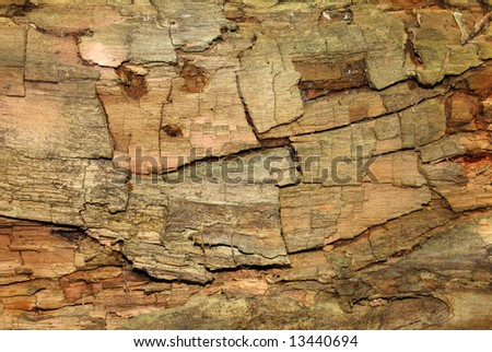 Textured dead tree bark.