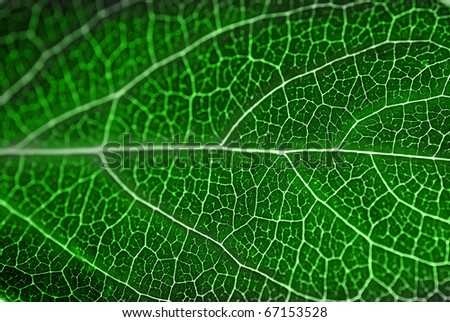 textured green leaf close up