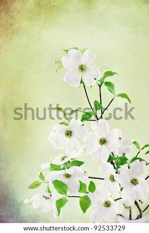 Textured image of a bouquet of white Dogwood blossoms.