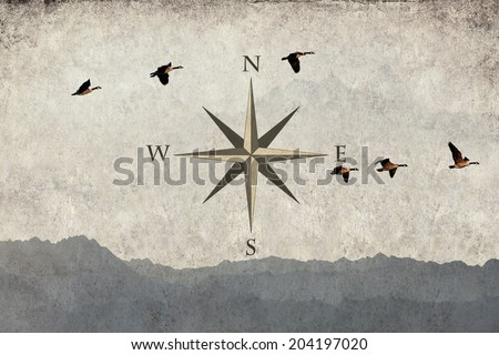 Textured old grange paper background wind rose and birds flying over mountains