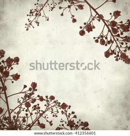 textured old paper background with Brachychiton acerifolius,  Illawarra Flame Tree #412356601
