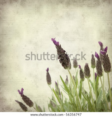 textured old paper background with french lavender
