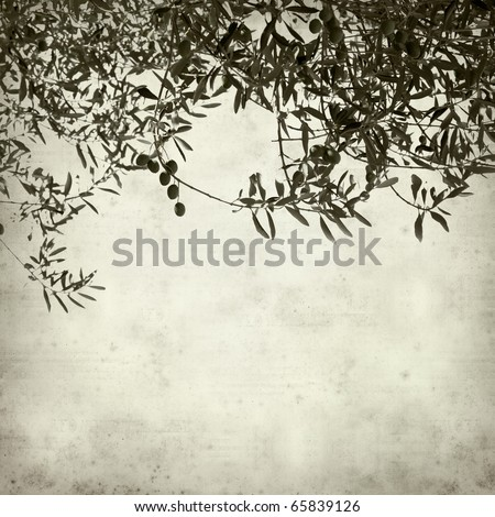 textured old paper background with green olives growing on branches