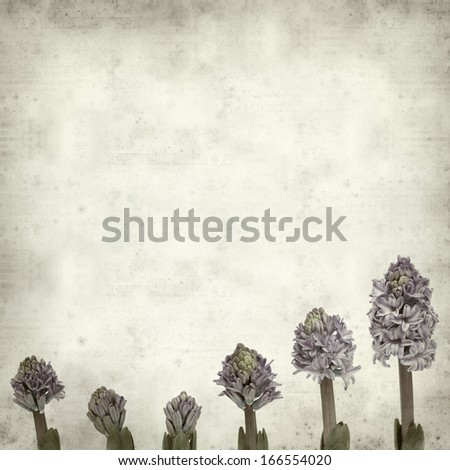 textured old paper background with opening hyacinth;