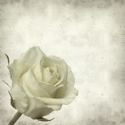 textured old paper background with pale yellow rose flower