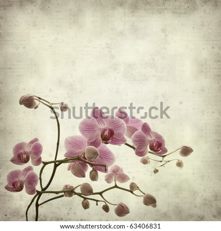 textured old paper background with  pink stripy phalaenopsis orchid - stock photo