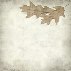 textured old paper background with red oak leaves