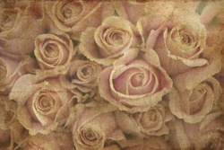 textured old paper background with roses
