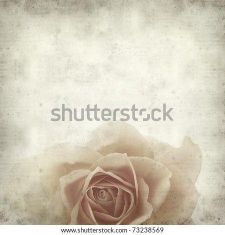 textured old paper background with single orange rose - stock photo