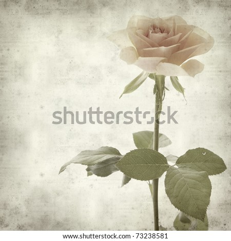 textured old paper background with single orange rose