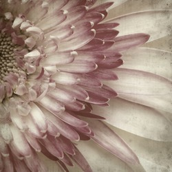textured old paper background with white and pink gerbera