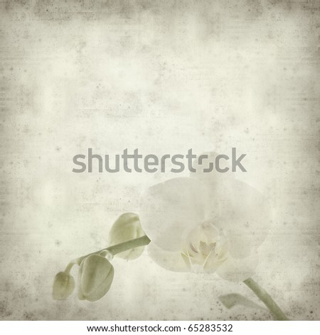 textured old paper background with white phalaenopsis orchid stem with one open flower