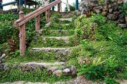 Textured stone stairs with green moss and plant.