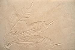 Textured tree leaves on sand background.