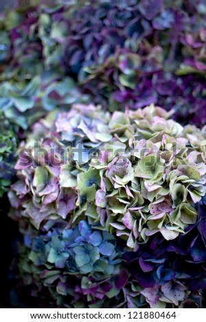 Textured vegetable with dried hydrangeas