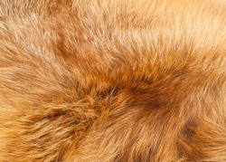 Textures red fox fur. Red fox shaggy fur texture cloth abstract, furry rusty texture plain surface, rough pelt background in horizontal orientation, nobody.