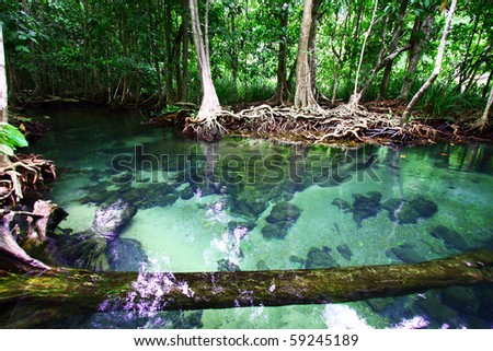 Tha Pom, Peat swamp forest in Krabi, Southern of Thailand