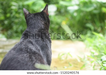 Thai black cat breed the tree view seats Lonely And feel lonely.jpg