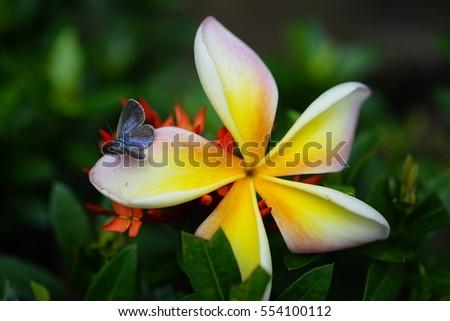 Sonya M Images Usseek Com