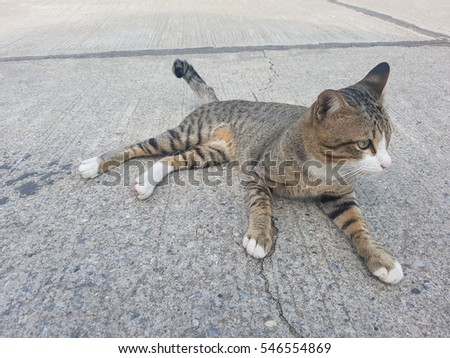 Thai Cat #546554869