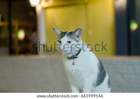 Thai cat  ,animals, animals animals animals  #661999546