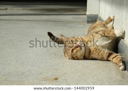 thai cat : happy time while morning sunshine